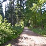 Waldweg im Königsforst