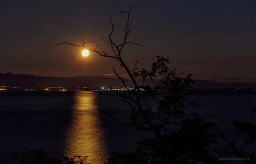 mjesec mjesečina lovran liburnia primorskogoranska croatia landscape seascape noć noćnafotografija drvo tree nebo sky
