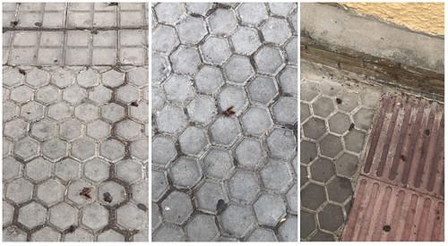 cucarachas collage | by Triana al día