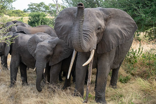 Elephant encounter | by Laura Jacobsen