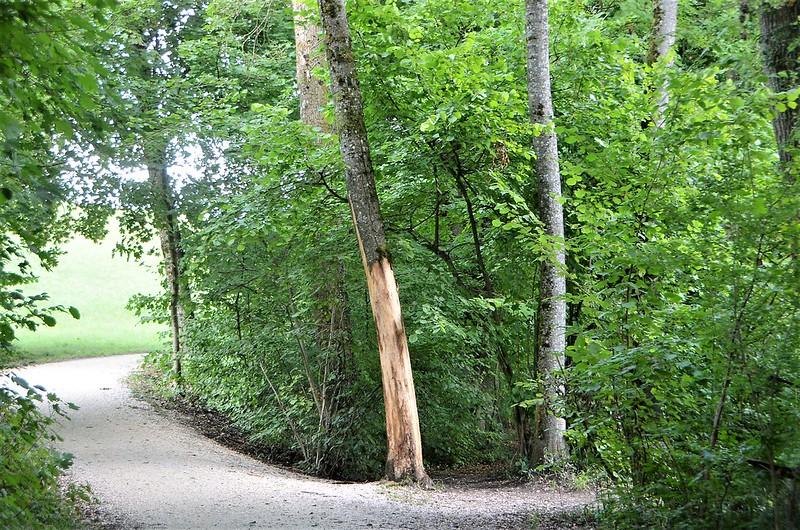 Tree Aare Path 18.08.2018
