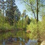 Frühling an einem Waldsee im Königsforst