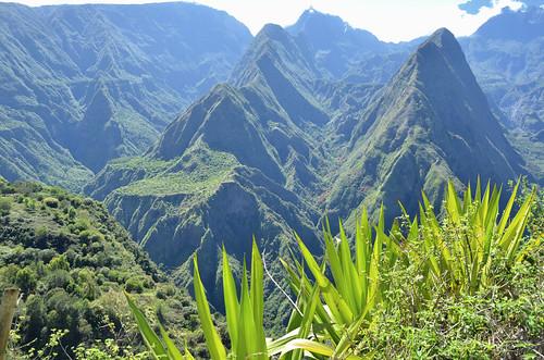 randonnée montagne forêt vert laréunion saariysqualitypictures v2000