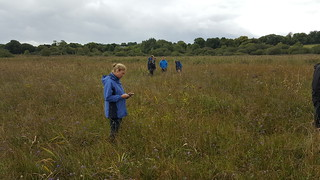 IRWC visits Pollardstown Fen, Sep 2018 | by Irish Ramsar Wetlands