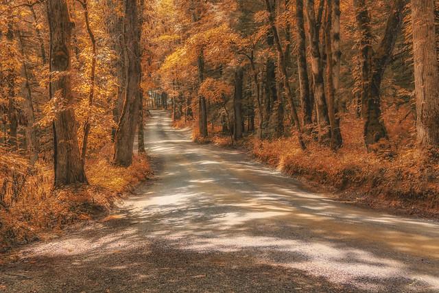 Road to Primitive Baptist Church