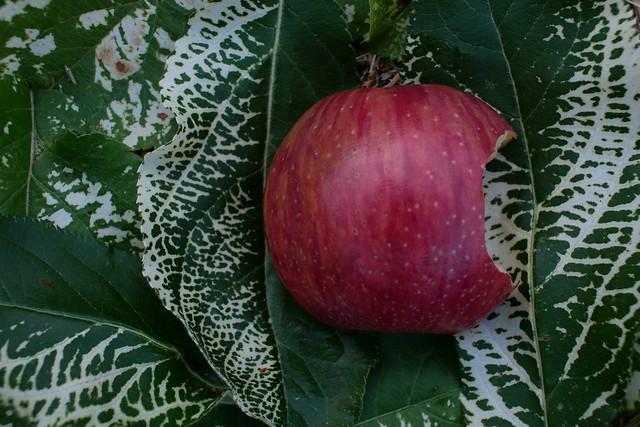 Apple Mosaic Virus on Apple Leaves