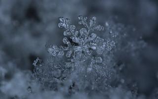 Snowflake details - ACD See Pro 2018 edit 1:1 - %100 crop | by Ciddi Biri