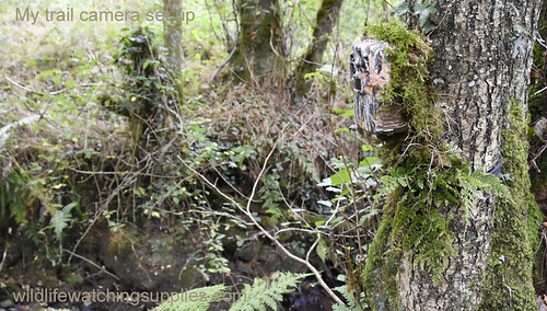 Trail camera set up | by Kevin Keatley1