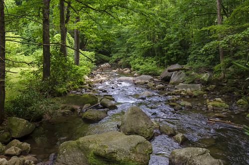 jones gap state park the south carolina outdoor landscape woods forest water stream river middle saluda