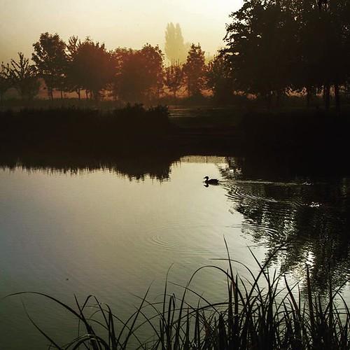 instagram ifttt spa henleyinarden warwickshire duck morning iphone iphone7 theardencotespa ardencote squareformat iphoneography