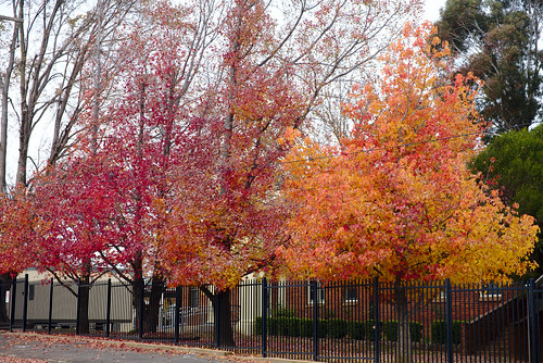 Autumn, Orange East Public School | by aenigmatēs