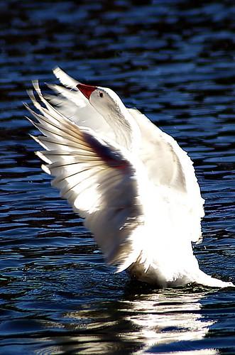Angel wings | by noelcmn