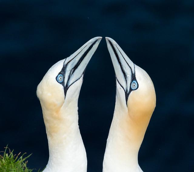 Shetlannin saaret
