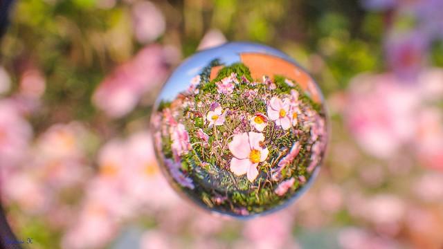 Flowers - 5847