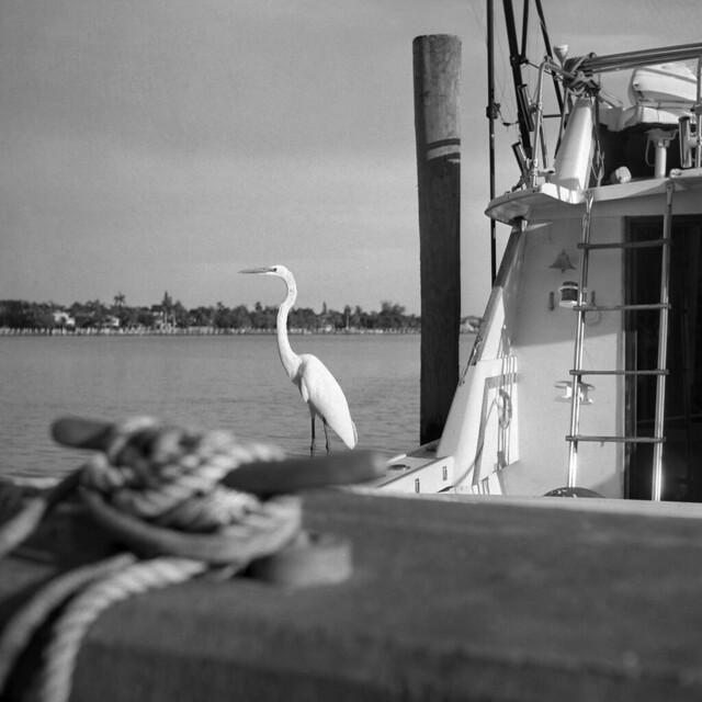 Dockhand