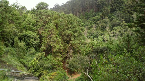 kodaikanal hike bearsholafalls forest jungle trees view