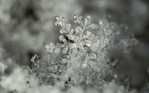 Snowflake details - Photoshop 2018 edit - %100 crop   by Ciddi Biri
