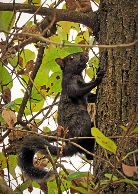 Unimpressed squirrel
