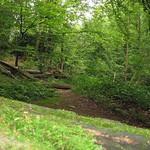 Auf dem Weg im Oefter Tal liegen umgestürzte Bäume, die Natur wird sich selbst überlassen