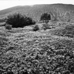 Views on Mt.Tarumae