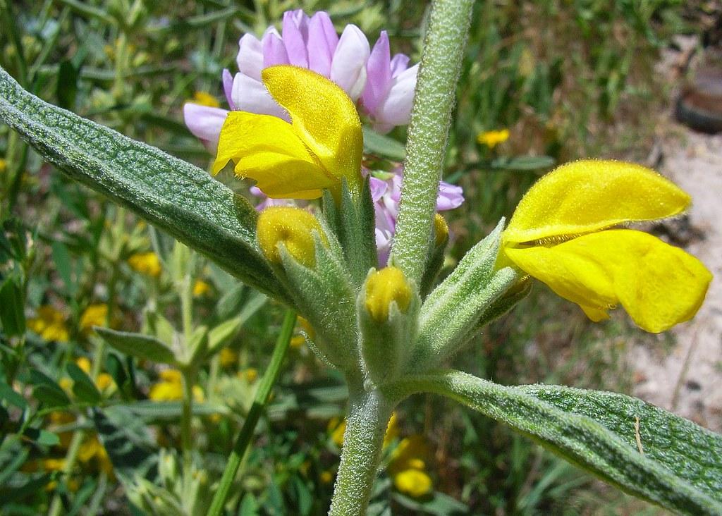 2008-06-25 tuin en uzengi 082