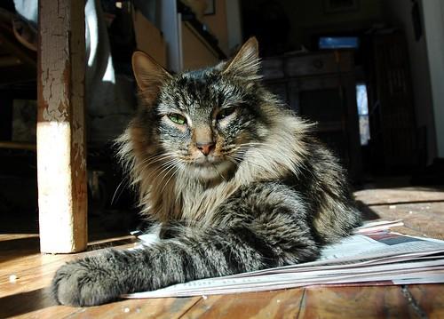 Cat Mandoo too   by eva101