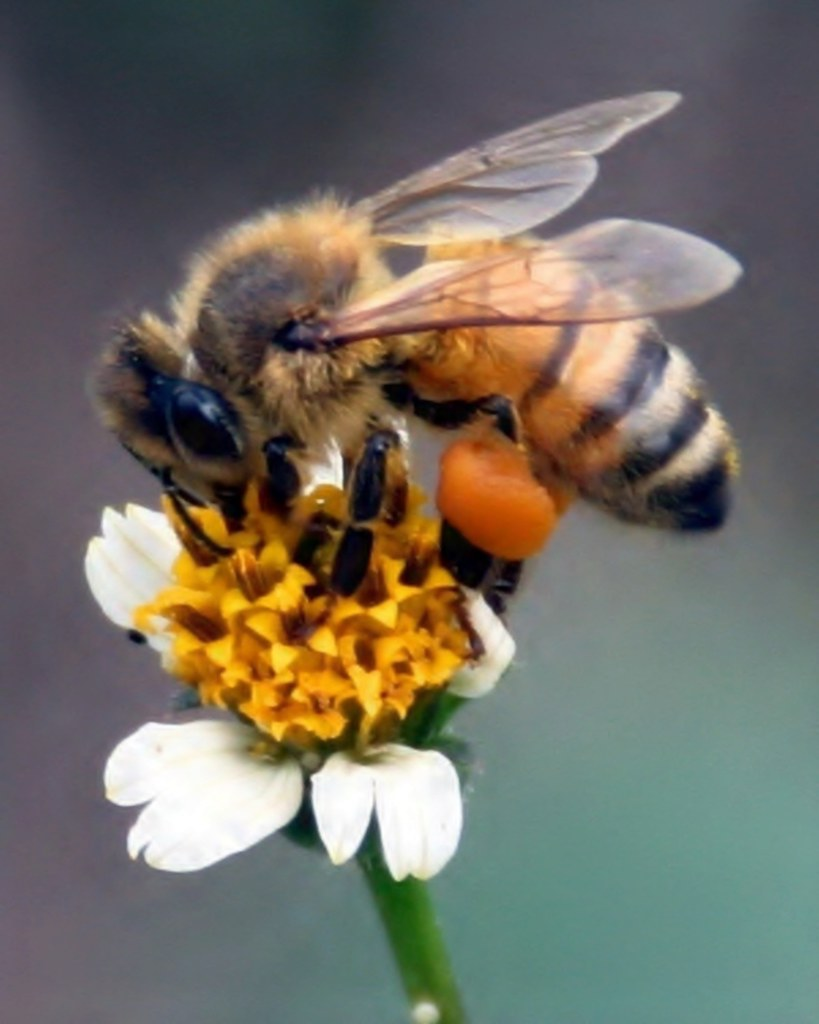 Busy Bee by whoops vision