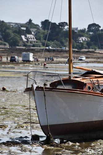 marée basse | by azillia