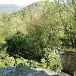 Die Natur hat die Ruine der Burg Drachenfels erobert