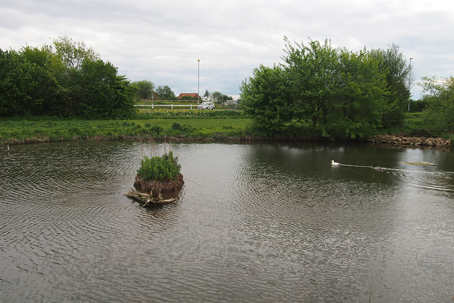 Sutterton pond