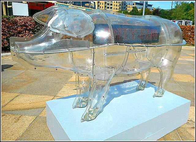 Transparent  Pig ...