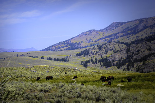 Bison View-1-Edit | by alnbbates