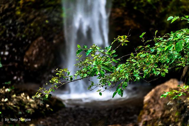 Plants along the Way to the Latourell Falls Portland OR USA-3a