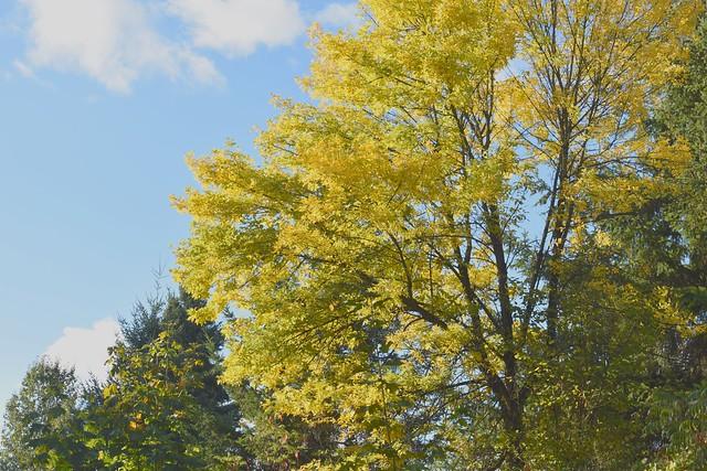 fall in Olympia