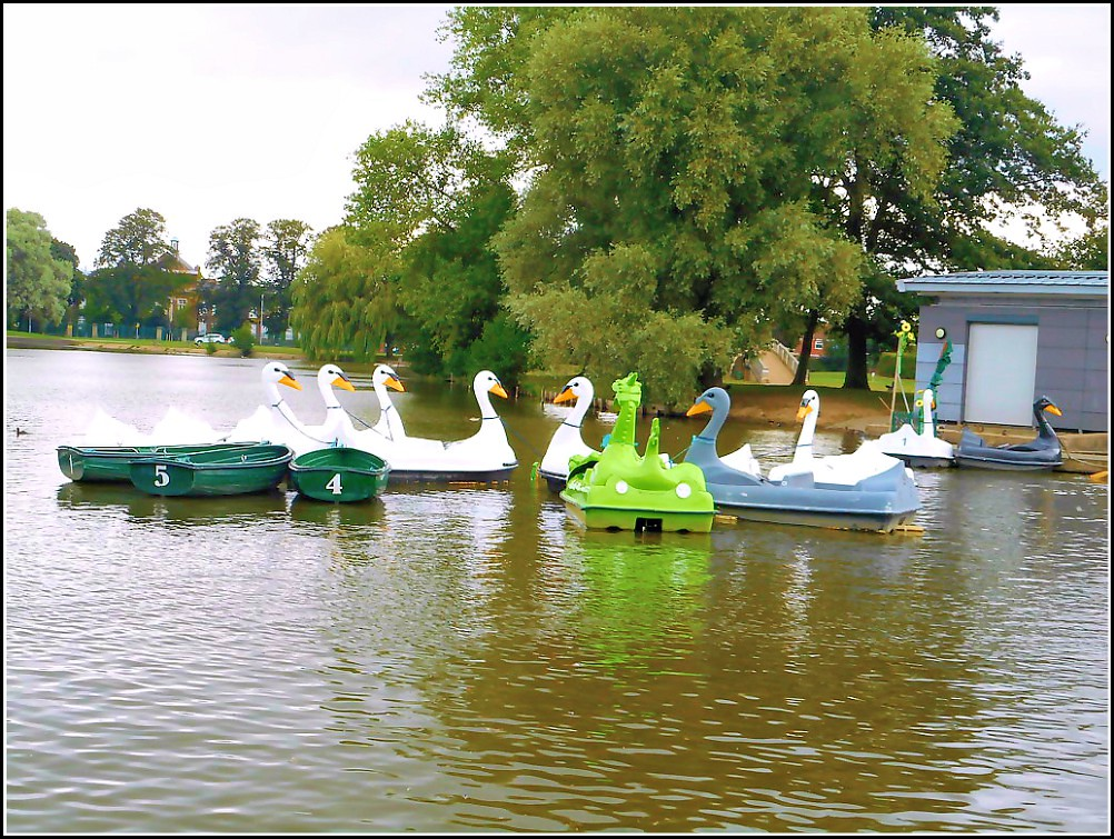 Swan Pedalos ...