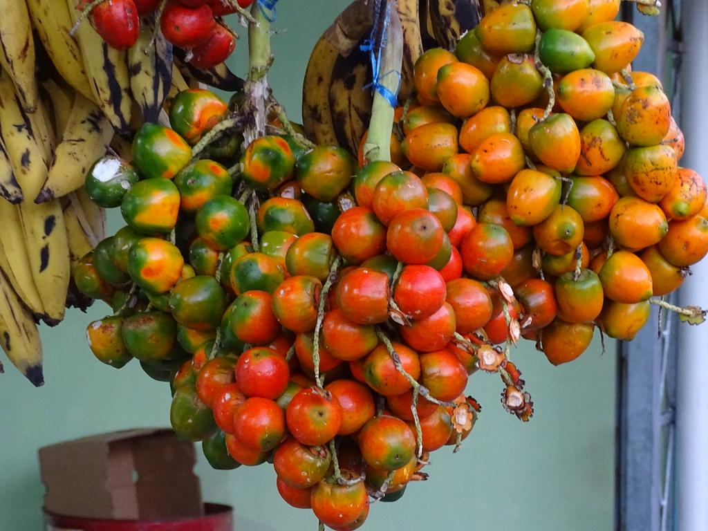 Früchte Pfirsichpalme peach palm (Bactris gasipaes)