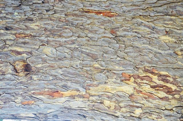 Textures of Tomb.