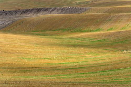 chalklands hertfordshire therfieldheath