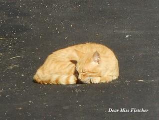 Romeo (7) | by Dear Miss Fletcher