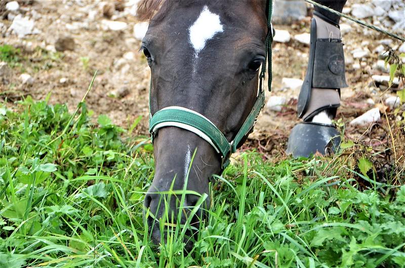 Horse 31.08 (5)
