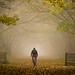 Soon Be Autumn! by Rob Pitt