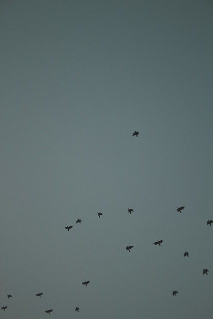 flight of the crows
