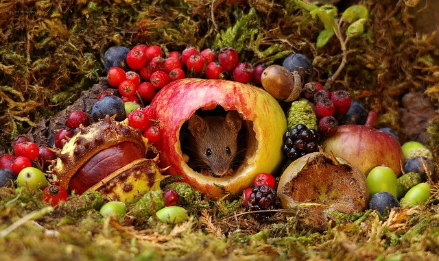 Autumn mouse with fruits and berries (2)