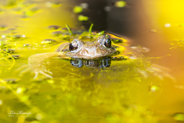 I love to be in your pond.