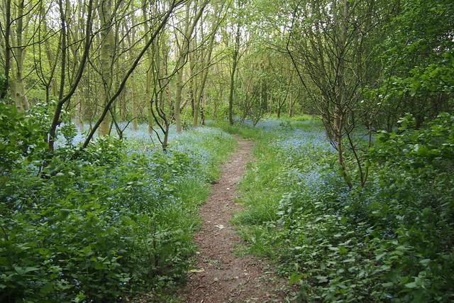 Woodland near Fosdyke