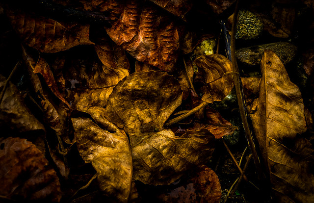 old leaves abstraction
