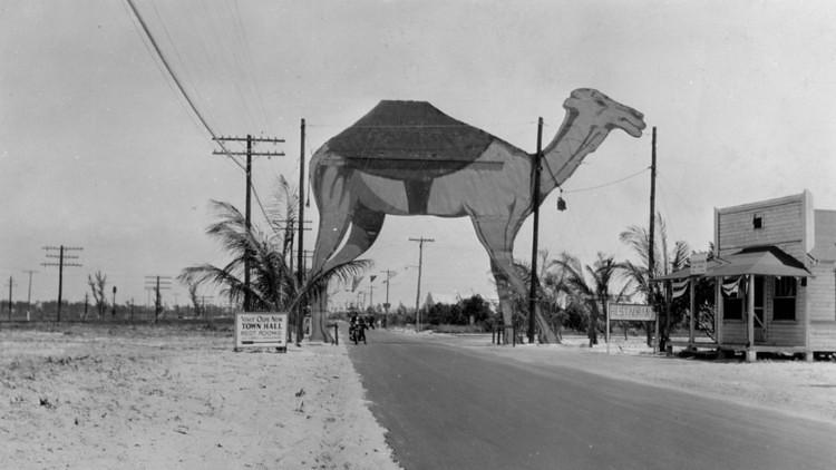Boca Raton Camel