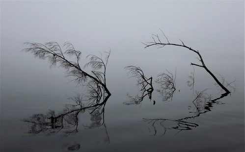 reflections lake summer canoeing cadence reflets water branches photography gmayster guymayerphotography gmayster01 minimalism zen spirituality
