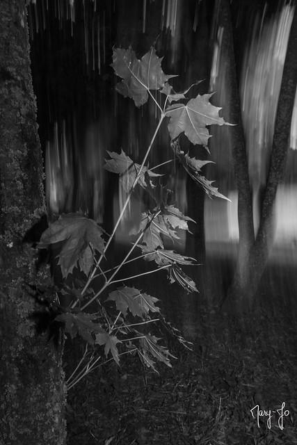 La face cachée de la forêt... The hidden face of the forest ...