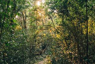 Knysna Forest 1/2 | by Ryan Jarrett 4130